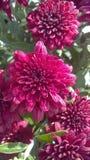 Flores en la floración Imágenes de archivo libres de regalías