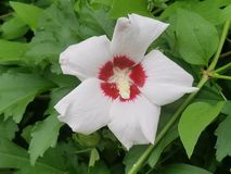 Flores en la floración Fotografía de archivo