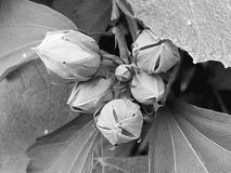 Flores en la floración Fotos de archivo
