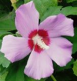 Flores en la floración Foto de archivo