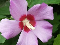 Flores en la floración Fotografía de archivo libre de regalías