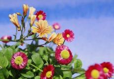 Flores en la floración con fuera del fondo del foco Imagenes de archivo