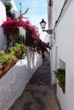 Flores en la floración en el pueblo español pintoresco Frigiliana Fotografía de archivo libre de regalías