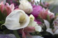 Flores en la foto de la ventana Foto de archivo libre de regalías