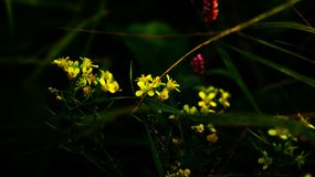 Flores en la hierba fotografía de archivo libre de regalías