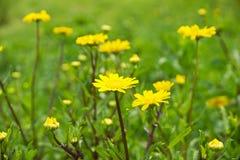 Flores en la isla del sao Miguel Foto de archivo