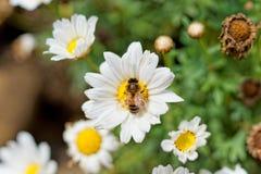 Flores en la isla del sao Miguel Fotos de archivo libres de regalías