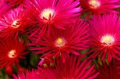 Flores en la isla del sao Miguel Fotos de archivo