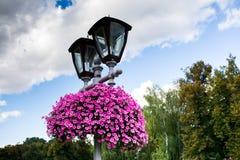Flores en la lámpara de calle Fotografía de archivo libre de regalías