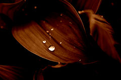 Flores en la lluvia [2] Imágenes de archivo libres de regalías
