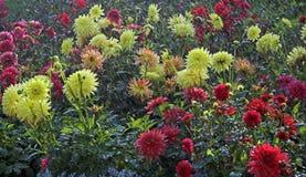 Flores en la lluvia Fotografía de archivo libre de regalías