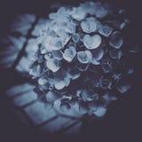 Flores en la lluvia Fotografía de archivo