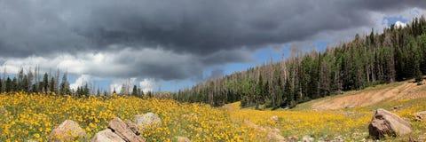 Flores en la lluvia Imagen de archivo libre de regalías