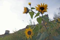 Flores en la mañana Fotografía de archivo libre de regalías