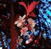 Flores en la madera fotografía de archivo libre de regalías