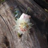 Flores en la madera Foto de archivo libre de regalías
