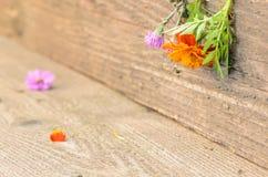 Flores en la madera rústica Imagen de archivo libre de regalías