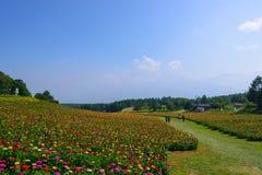Flores en la montaña de Fujimi Imágenes de archivo libres de regalías