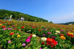 Flores en la montaña de Fujimi Foto de archivo libre de regalías