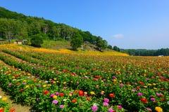 Flores en la montaña de Fujimi Imagen de archivo libre de regalías