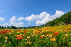 Flores en la montaña de Fujimi Imagenes de archivo