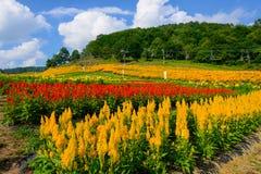 Flores en la montaña de Fujimi Imagen de archivo