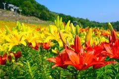Flores en la montaña de Fujimi Fotografía de archivo libre de regalías
