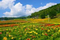 Flores en la montaña de Fujimi Foto de archivo