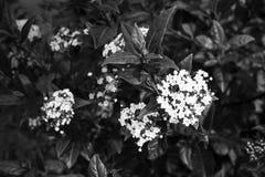 Flores en la naturaleza Imagen de archivo