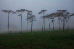 Flores en la niebla Fotos de archivo libres de regalías