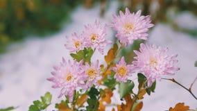 Flores en la nieve almacen de metraje de vídeo