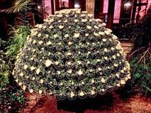 Flores en la noche Imagen de archivo