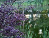 Flores en la orilla del lago foto de archivo