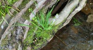 Flores en la orilla del río fotos de archivo