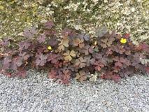 Flores en la pared y el asfalto Imágenes de archivo libres de regalías