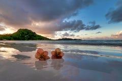 Flores en la playa Imagen de archivo