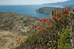 Flores en la playa Fotos de archivo libres de regalías