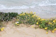 Flores en la playa Imagen de archivo libre de regalías