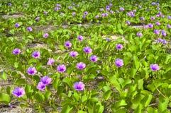 Flores en la playa Imagenes de archivo