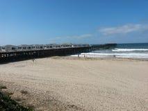 Flores en la playa del Wipeout en La Jolla imagen de archivo libre de regalías
