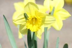 Flores en la primavera de la floraci?n I 2019 foto de archivo libre de regalías