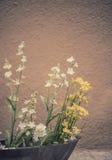Flores en la puesta del sol Foto de archivo libre de regalías