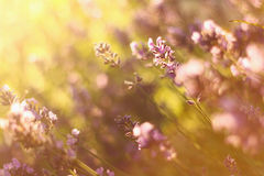 Flores en la puesta del sol fotos de archivo libres de regalías