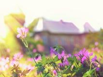 Flores en la puesta del sol en el edificio del fondo Fotos de archivo libres de regalías