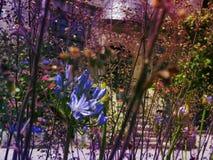 Flores en la puesta del sol en el edificio del fondo Imagen de archivo