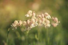 Flores en la puesta del sol en el Tyrol del sur Imágenes de archivo libres de regalías