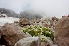 Flores en la roca Foto de archivo libre de regalías