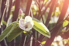 Flores en la salida del sol Foto de archivo