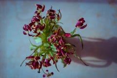 Flores en la tierra Fotos de archivo libres de regalías