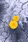 Flores en la tierra seca imágenes de archivo libres de regalías
